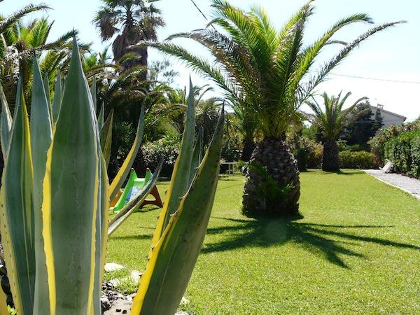 Jardin entretenu et palmiers face à votre location vacances